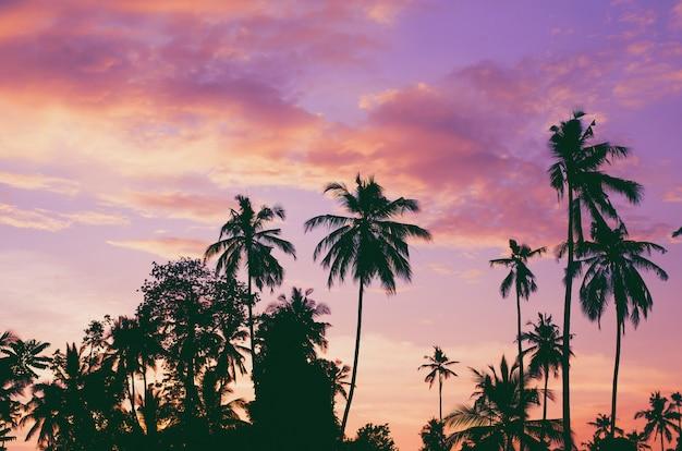 Donkere silhouetten van kokospalmen tegen kleurrijke zonsonderganghemel