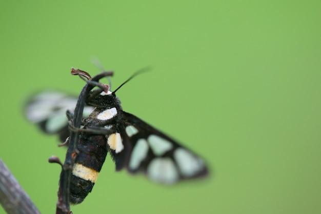 Donkere vlinder op een droge tak
