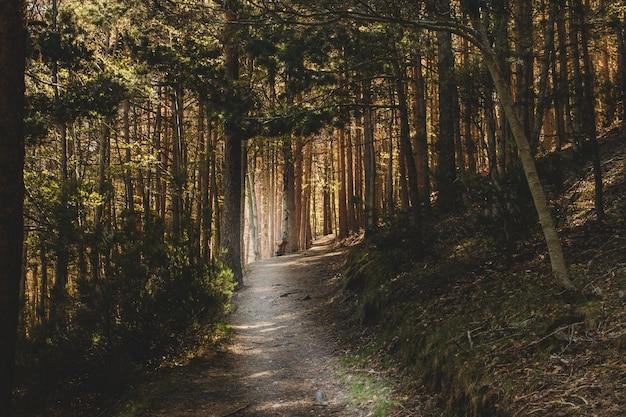 Donkere weg in het bos