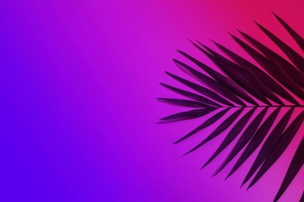 Donkergroen tropisch palmblad geïsoleerd op paars roze achtergrond met kleurovergang. ontwerp voor uitnodigingskaarten, flyers. abstracte ontwerpsjablonen voor posters, covers, wallpapers met copyspace voor tekst.