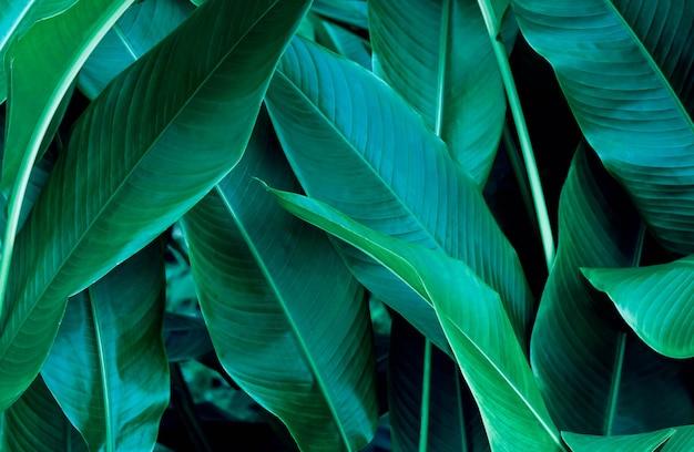 Donkergroene blad textuur achtergrond