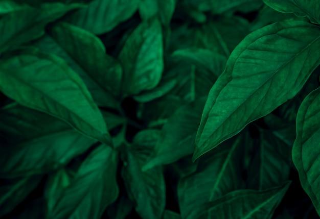 Donkergroene bladeren in de tuin. tropisch plantenbehang.