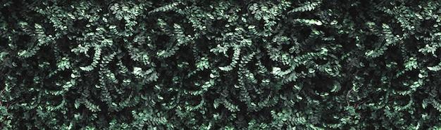 Donkergroene bladeren muur achtergrond