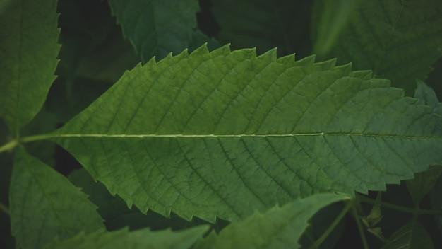 Donkergroene bladerenachtergrond abstracte groene textuur, natuurachtergronden, tropische bladeren