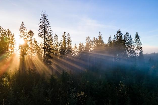 Donkergroene pijnbomen in humeurig sparrenbos met zonsopganglichtstralen die door takken in mistige herfstbergen glanzen.