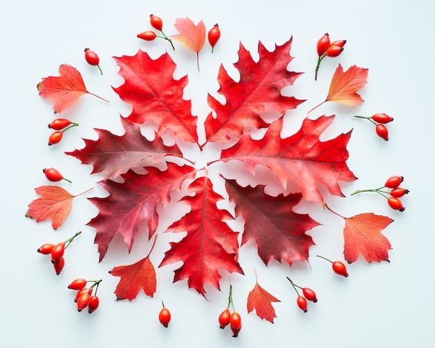 Donkerrood eiken bladeren, plat leggen op witte achtergrond. abstracte herfst arrangement.