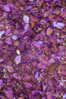 Donkerrood zoals bordeauxrode en kastanjebruine herfstbladeren als achtergrond. bovenaanzicht. natte herfstbladeren in het bos