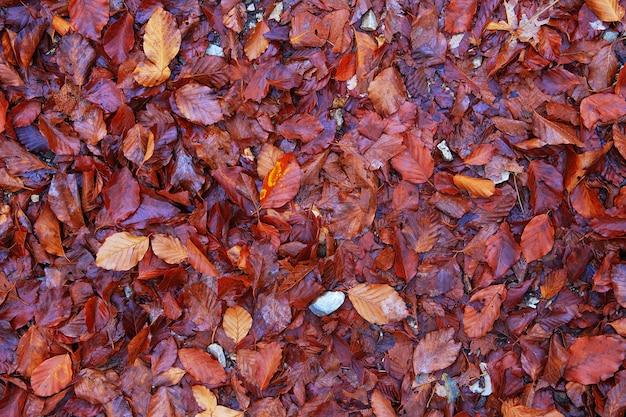 Donkerrood zoals bordeauxrode en kastanjebruine herfstbladeren als achtergrond