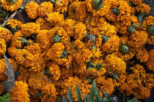 Dood cempasuchil bloemen in het veld close-up