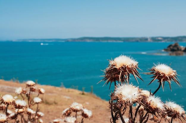 Doorn droge bloemen tegen blauwe zee