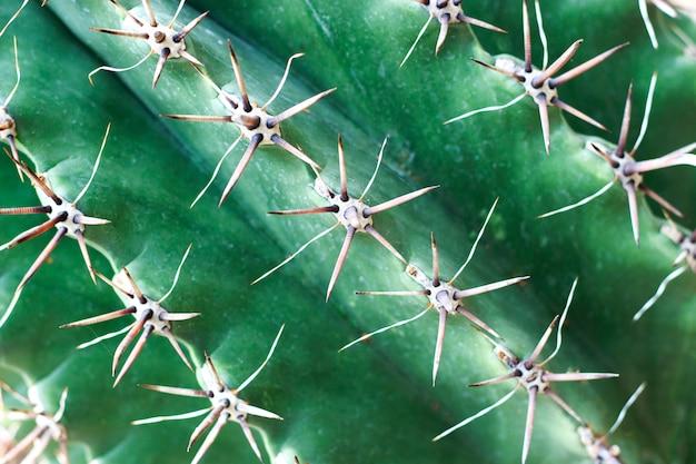 Doornig groen cactusclose-up, textuur, achtergrond