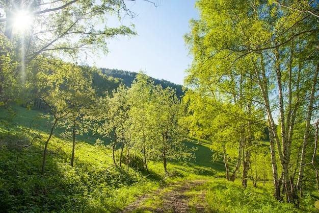 Dorps bosweg en stralende zon op een lenteavond