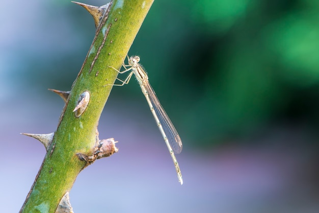 Dragonfly en steel met doornen