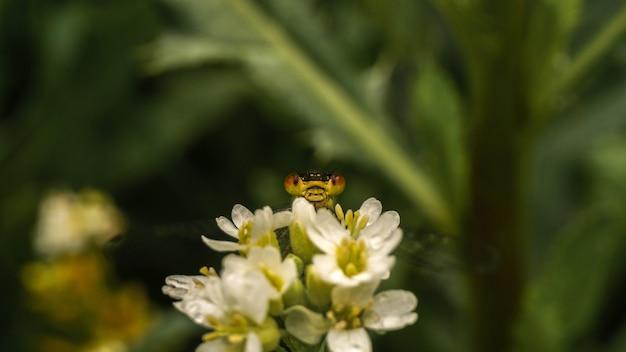 Dragonfly gluurt naar buiten vanwege bloemen, selectieve focusafbeelding