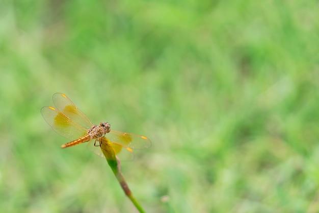 Dragonfly hangend aan de bloem en wazige achtergrond close-up fotografie