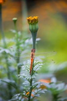Dragonfly op de bloem