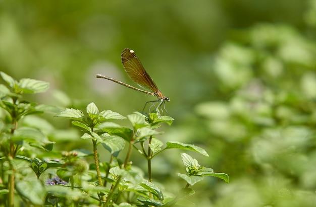 Dragonfly poseert op groene bladeren genomen met macrolens