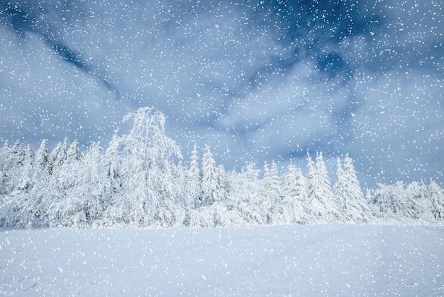 Dramatische winterse scene. karpaten, oekraïne, europa. bokeh licht