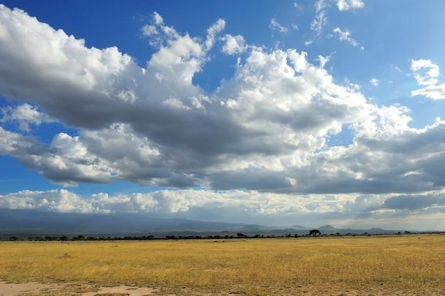 Dramatische wolk en het uitgestrekte grasland van savanne
