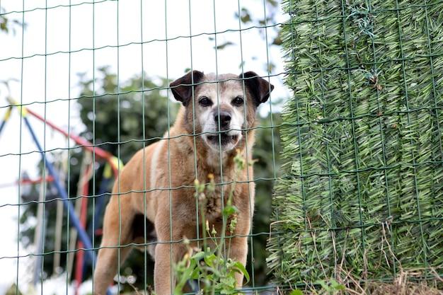 Dreigende hond achter een hek die zijn territorium verdedigt