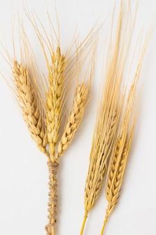 Drie aartjes tarwe gebonden met een touw en twee gerst takje op een witte achtergrond