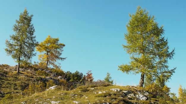 Drie alpine bomen op blauwe hemel. herfst landschap. 4k