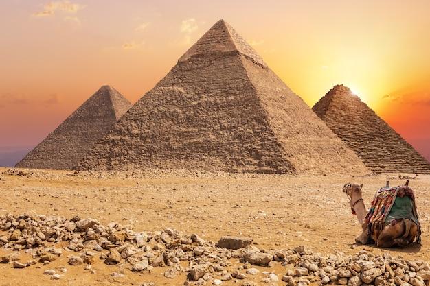 Drie belangrijkste piramides van gizeh en een kameel bij zonsondergang, egypte.