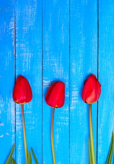 Drie bloeiende rode tulpen