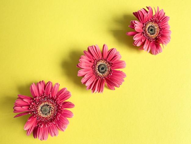 Drie bloemen van karmozijnrode gerbera's, rode gerbera's die diagonaal liggen
