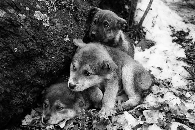 Drie dakloze kleine bevroren puppys met droevige ogen, in sneeuw in bos dichtbij oude boom tegen oppervlakte van de winter