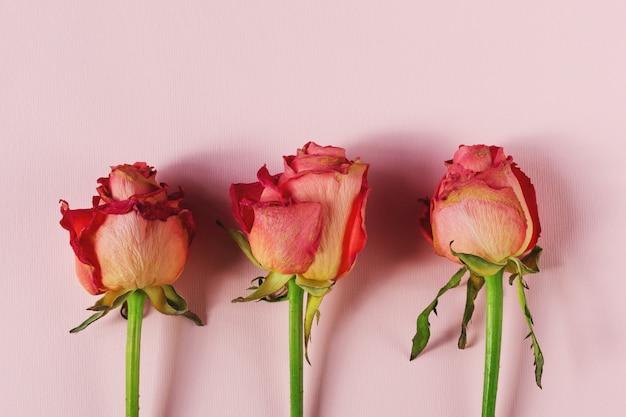 Drie gedroogde rozenbloemkoppen. bloem herbarium.