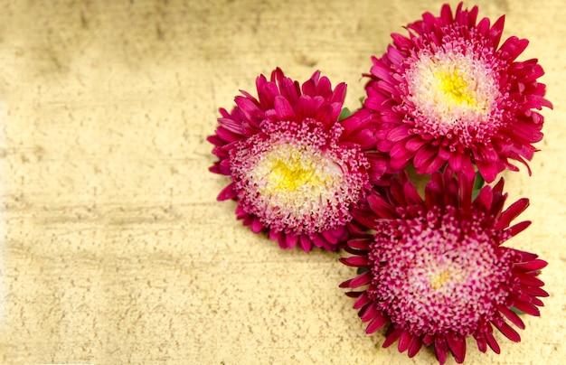Drie geïsoleerd gerber madeliefje roze bloemhoofd dat op gouden achtergrond wordt geïsoleerd