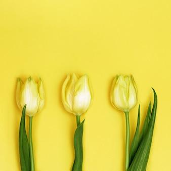 Drie gele tulpen, weergave van bovenaf. heldere lente bloeiende bloemen. natuurlijke bloemrijke achtergrond.