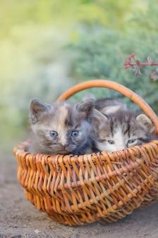 Drie gestreepte katjes die in het gras zitten