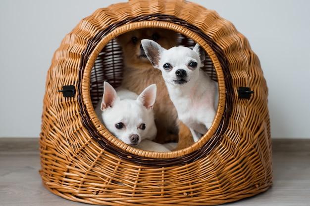 Drie grappige en schattige puppy's portret.