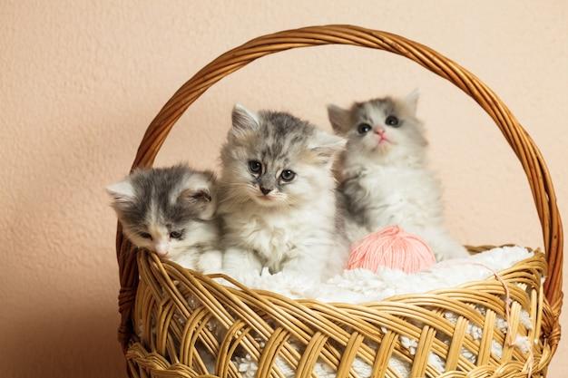 Drie grijze kittens in een mand met een roze bol garen
