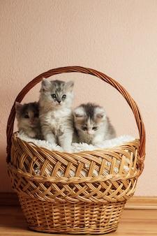 Drie grijze kittens in een mand met over roze muur