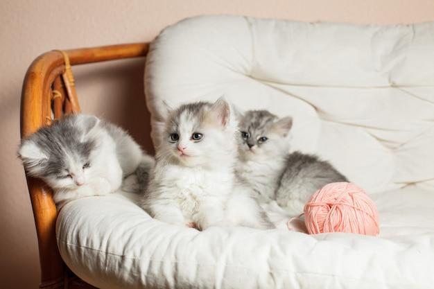 Drie grijze kittens op het witte kussen met een roze bolletje garen