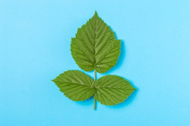 Drie groene bladeren op blauw
