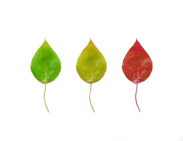 Drie groene, rode en gele bladeren op wit