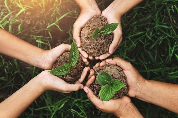 Drie handen die jonge plant voor het planten houden