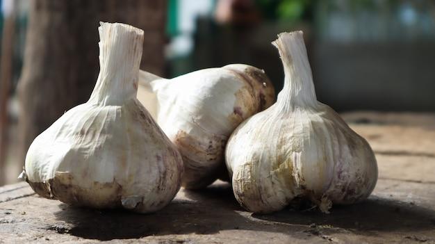 Drie hoofden van messidor-knoflook op een houten achtergrond. deze variëteit is hoogproductief, van goede kwaliteit, rijpt vroeg en heeft hoge opbrengsten. de hoofdkleur van droge buitenste schubben is geelachtig wit.