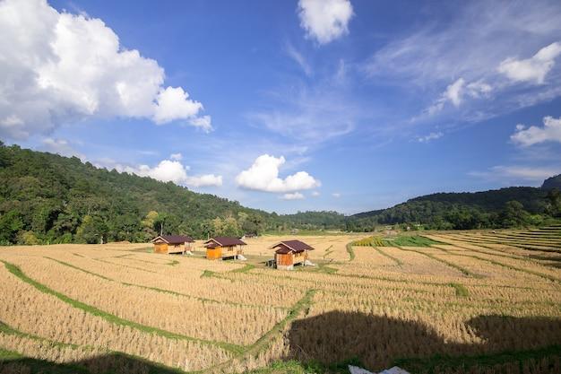 Drie huisjes in het midden van rijstvelden