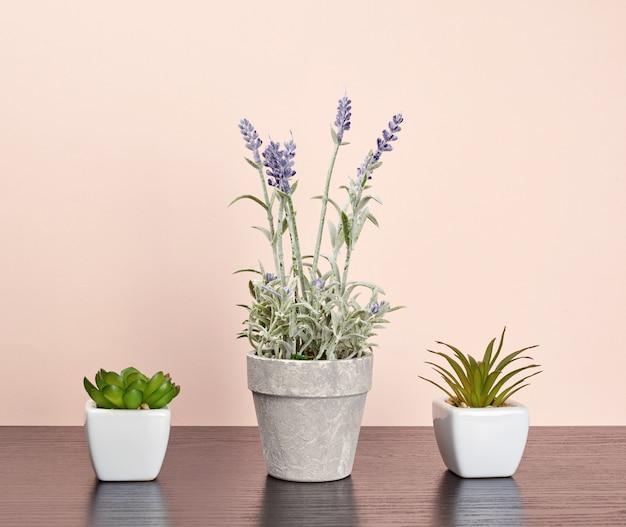 Drie keramische potten met planten op een zwarte tafel