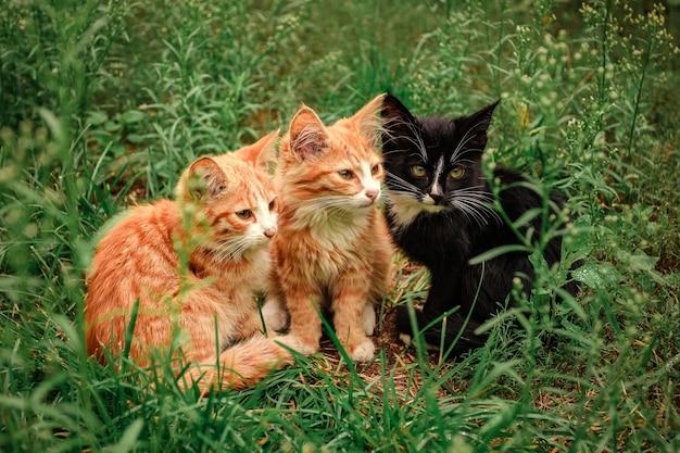 Drie kittens zitten in het gras. twee gember en één zwart katje zitten in het groene gras.