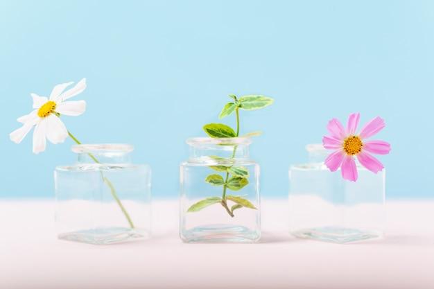 Drie kleine glazen vaasjes met bloemen en plant op blauw en roze