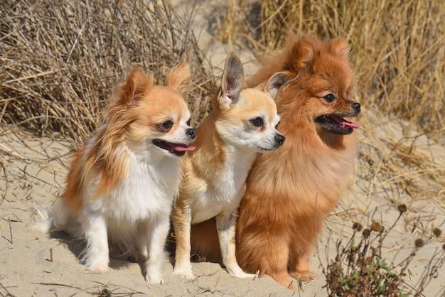 Drie kleine honden die in de natuur verblijven