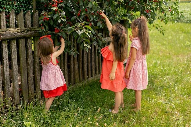 Drie kleine meisjes op blote voeten in rode jurken plukken rijpe, sappige kersenbessen van een boom