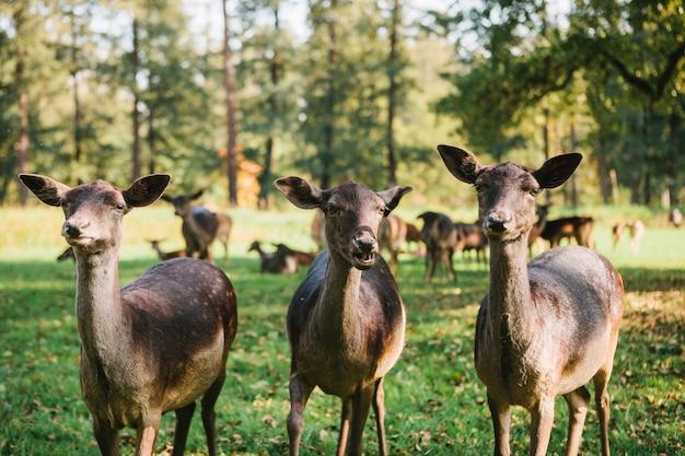 Drie mooie nieuwsgierige kuiten in park
