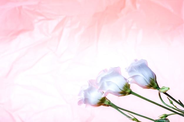 Drie mooie witte rozen op een gestructureerde achtergrond.
